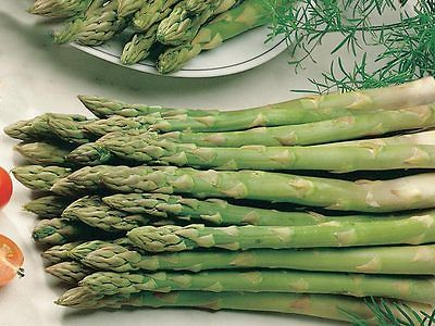 Asparagus Seeds - VIKING - Gmo Free Hardy Variety - Delicious Flavor - 20 Seeds