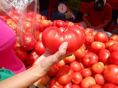 Tomato Seeds - BEEFSTEAK - Bush Tomato - Great for Freezing & Canning - 10 Seeds