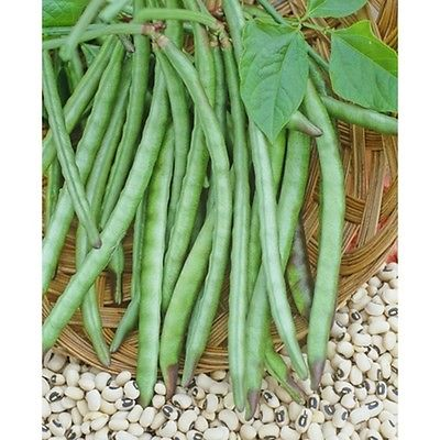 Pea Seeds - DIXIE LEE CROWDER COW - High Yielding and Easy to Grow - 50 Seeds