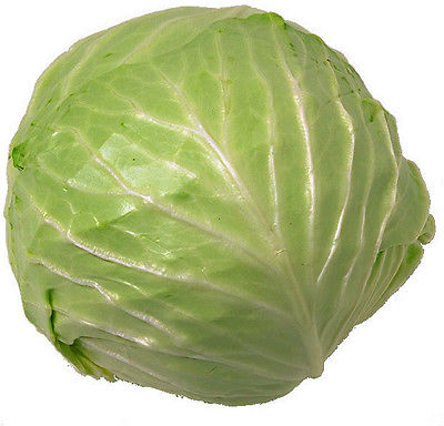 Cabbage Seeds - ATLANTIS - Early Variety - Favorite in Canada -NON GMO- 50 Seeds