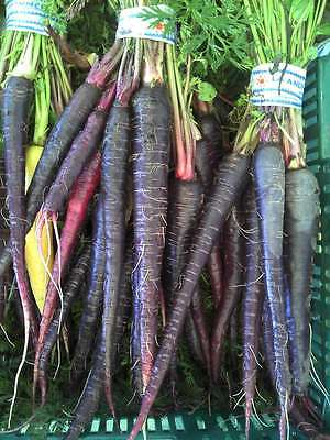Carrot Seeds - PURPLE DRAGON - Stunning Heirloom Vegetable -GMO FREE- 50 Seeds
