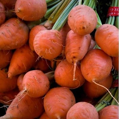 Carrot Seeds - PARMEX - Outstanding Flavor and Lovely Crunchy Texture -50 Seeds