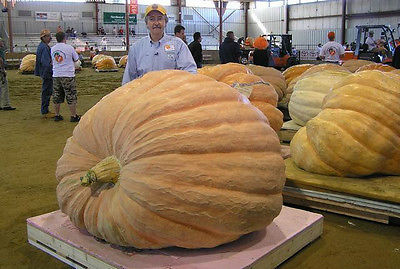 Dill's Atlantic Giant Pumpkin Seeds - Can Grow to 1600 lbs. - Bulk - 50 Seeds