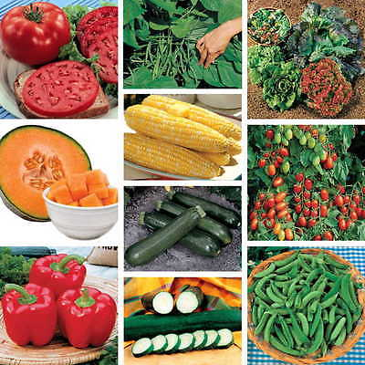 GARDEN SURVIVAL Seed Variety -Entire Vegetable Garden- Wholesale - 1700+ Seeds
