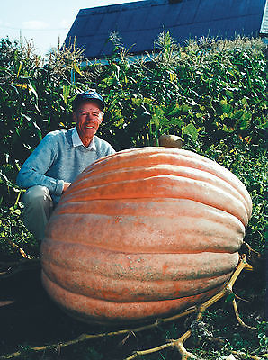 Dill's Atlantic Giant Pumpkin Seeds - Monster Pumpkin!!! - Can Grow to 1600 lbs.