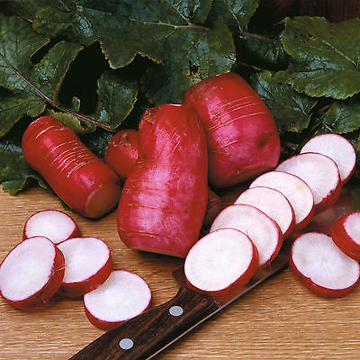 Radish Seeds - CHINA ROSE - Organic - Heirloom - Winter Vegetable - 50+ Seeds