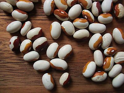 Bean Seeds - YELLOW EYED - Easy to Grow - Protein - High Yielding - 50 Seeds