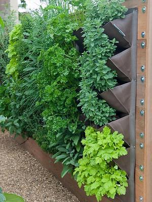 Culinary Herb Garden -12 Herb Variety -Grow Indoors or Out!-1,200+ Seeds/Bulbils