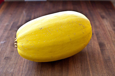 Squash Seeds - SPAGHETTI - Creamy-Yellow Coloured Spaghetti Squash - 10+ Seeds