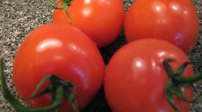 Tomato Seeds - MOUNTAIN GLORY VFFF/TSWV - Hybrid Bush Tomato Variety - 25 Seeds