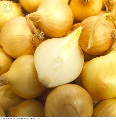 Potato Onions ~Yellow~ Multiplier Onion ~ Winter Surviver ~ Mild Taste ~24 Bulbs