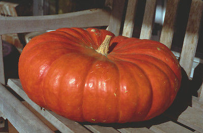 Pumpkin Seeds- CINDERELLA - Antique French Heirloom - Kids Favorite - 10 Seeds
