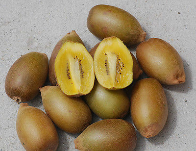 Kiwi Seeds - GOLDEN - Sweet Golden-Yellow Fruit - RARE - GMO FREE - 25 Seeds