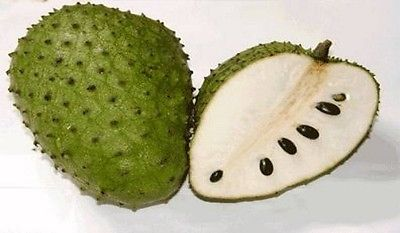 Organic Soursop Seeds - Medicinal Fruit - Antimicrobial Agent  - 50 Seeds
