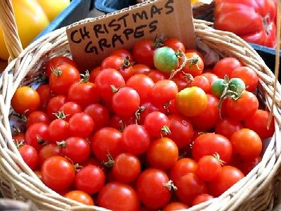 Tomato Seeds - CHRISTMAS GRAPE TOMATO- Hybrid Non Treated - Vegetable- 10 Seeds