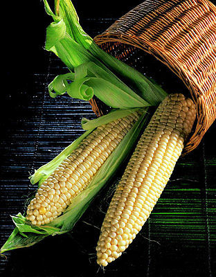 Sweetcorn Seeds - EARLY EXTRA - High Yielding Variety - theseedhouse - 50+ Seeds
