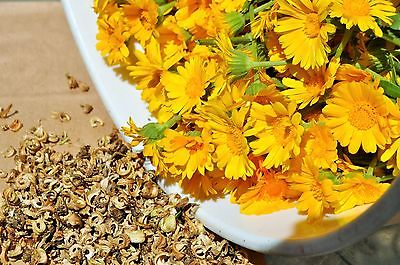 Calendula Seeds - RESINA - Pot Marigold - Edible Flowers & Leaves - 25 Seeds