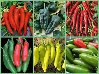 Vegetable Garden Seed Collection - 6 HOT!!!! Pepper Varieties - 120 Seeds