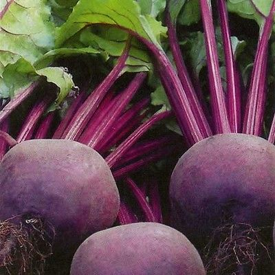 Beetroot Moulin Rouge Seeds - Ideal Source of Potassium - NON GMO - 50+ Seeds