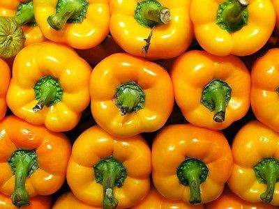 Sweet Bell Pepper Seeds - GOLDEN CALWONDER - Organic - Very Sweet - 20+ Seeds
