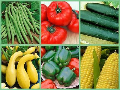 6 Vegetable Garden Favourites - Survival Variety - GMO FREE - 600+ Seeds