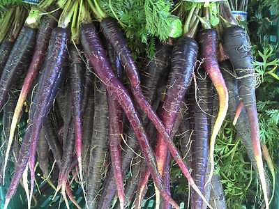 Carrot Seeds - PURPLE HAZE -  Deep Purple Outside-Bright Orange Inside- 50 Seeds