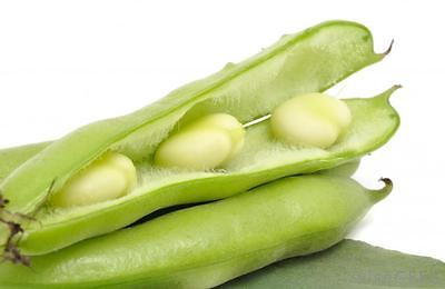 Bean Seeds - SWEET LUPINI BEAN - RARE - Very Easy to Grow - GMO FREE - 10 Seeds