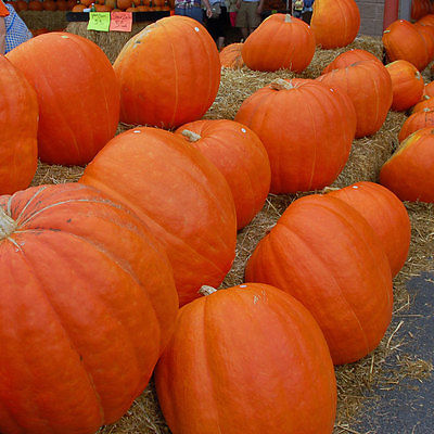 Pumpkin Seeds- BIG MAX -Beautiful Red -Orange Skin Bright Orange Flesh -10 Seeds