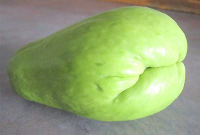 Chayote Squash - Edible Leaves - Vegetable & Greens -Grow Indoors Too- 2 Chayote