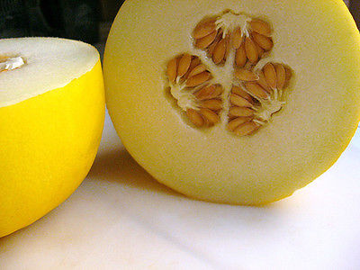 Melon Seeds - CANARY - Large Bright Yellow Melon - Sweet Flesh - 20+ Seeds