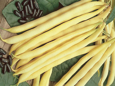 Bean Seeds - PENCIL POD - Black Wax - Bulk - Wholesale Vegetable - 200 Seeds