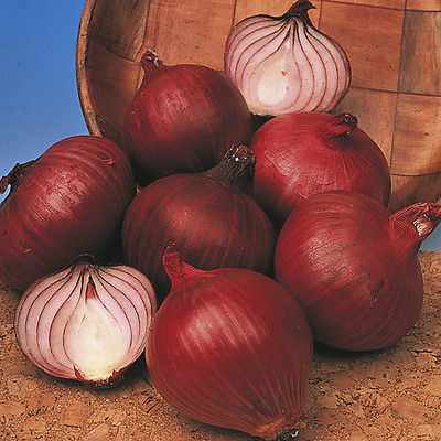 Onion Sets - RED KARMEN - Great for Salads and Burgers, Easy to Grow - 15 Bulbs
