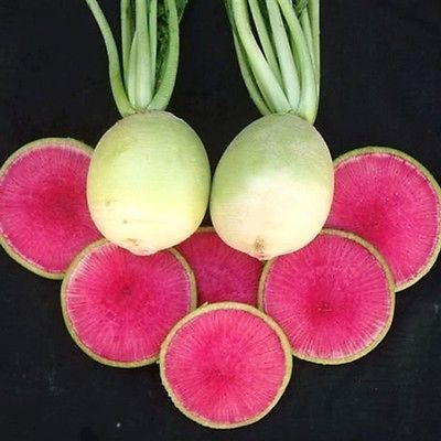 Radish Seeds - RED MEAT - Unique Heirloom Garden Vegetable - Canada - 50 Seeds