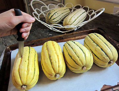Squash Seeds - SWEET POTATO - Excellent for Pie Baking - Stores Well - 10 Seeds