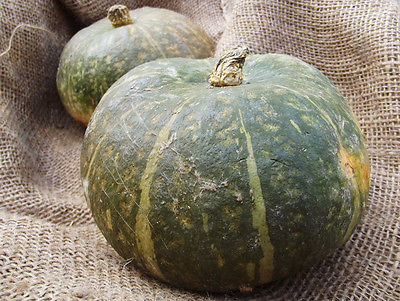 Squash Seeds - NUTTY DELICA - Vegetable - GMO FREE -  theseedhouse - 10 Seeds