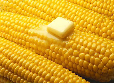 Sweetcorn Seeds - SENECA HORIZON - Yellow Corn - 8 1/2 Inch Cobs - 50 Seeds