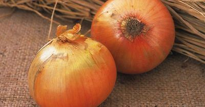 Onion Seeds - KEEPWELL F1 - Huge Onions - Great Flavor - Gmo Free - 50+ Seeds
