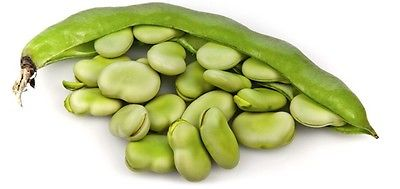Beans Seeds - FAVA BROAD - Fastest Maturing Bean Varieties-Nutritional- 25 Seeds
