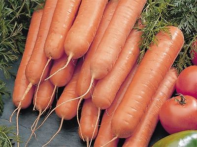 Carrot Seeds - SCARLET NANTES - Orange Interior with Sweet Taste - 100+ Seeds