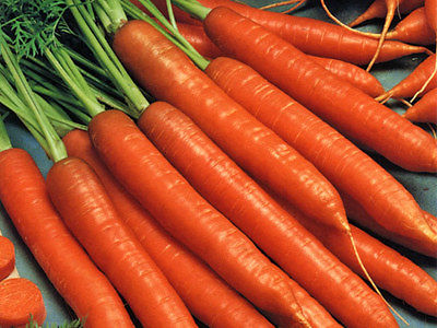 Carrot Seeds - SCARLET NANTES - Orange Interior with Sweet Taste - 500+ Seeds