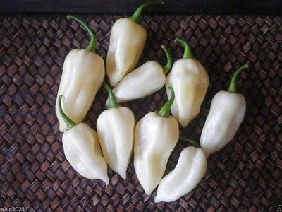 Hot Pepper Seeds - RIO DE ORO - Hybrid Hot Pepper - Gmo Free - 10 Seeds