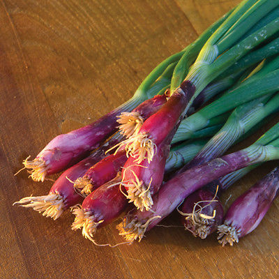 Onion Seeds - LILIA - Stunning addition of Color in Salads- Gmo Free - 50+ Seeds