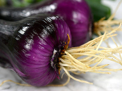 Onion Seeds - NORTH HOLLAND BLOOD RED - Dutch Red Onions - Gmo Free - 50+ Seeds