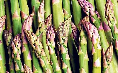 Asparagus Seeds - UC-157 F2 HYBRID - Juicy Spears - Gmo Free - 20 Seeds